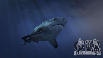 Как найти акулу в ГТА 5