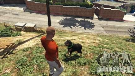 Выгул собаки из ГТА 5