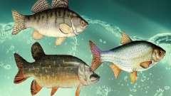 Новые рыбы (пресноводные)