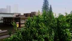 Новая растительность 2013